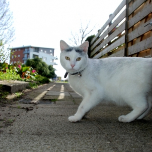 White cat street