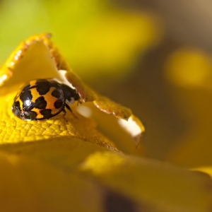 Ladybird in autumn