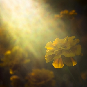 Sunrays on flowers