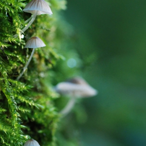 Moss and mushrooms