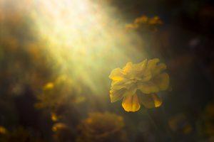 Zonnestralen op bloem