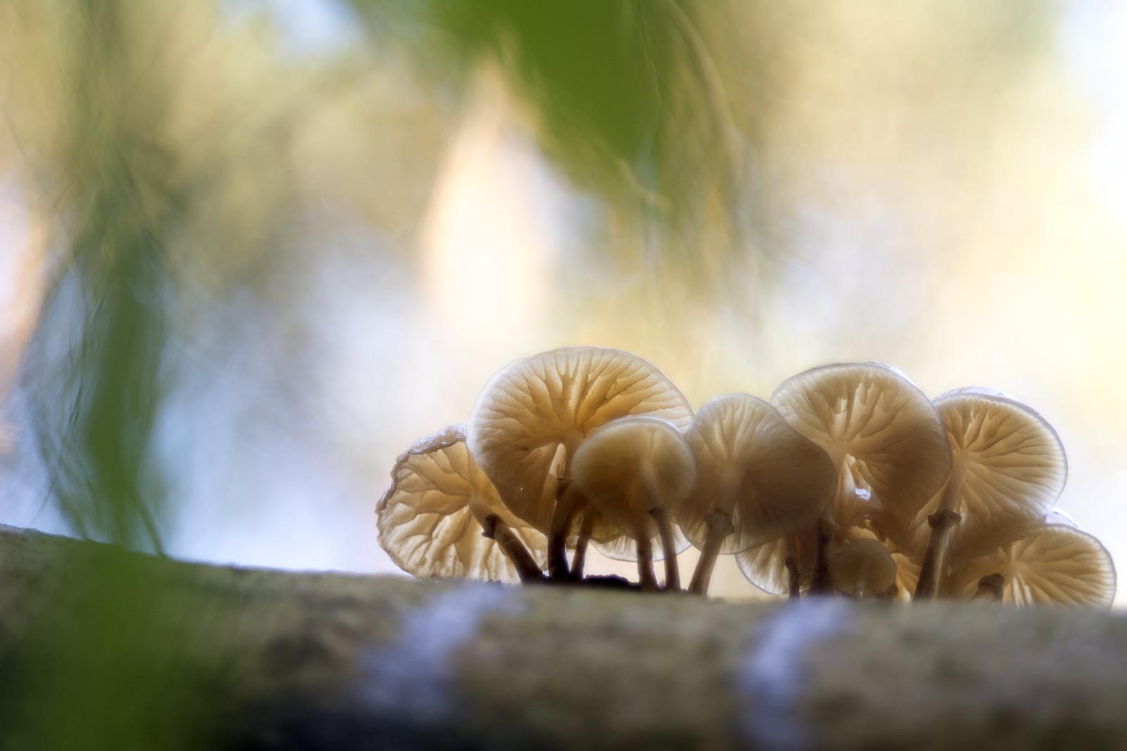 Mushroom bokeh 2
