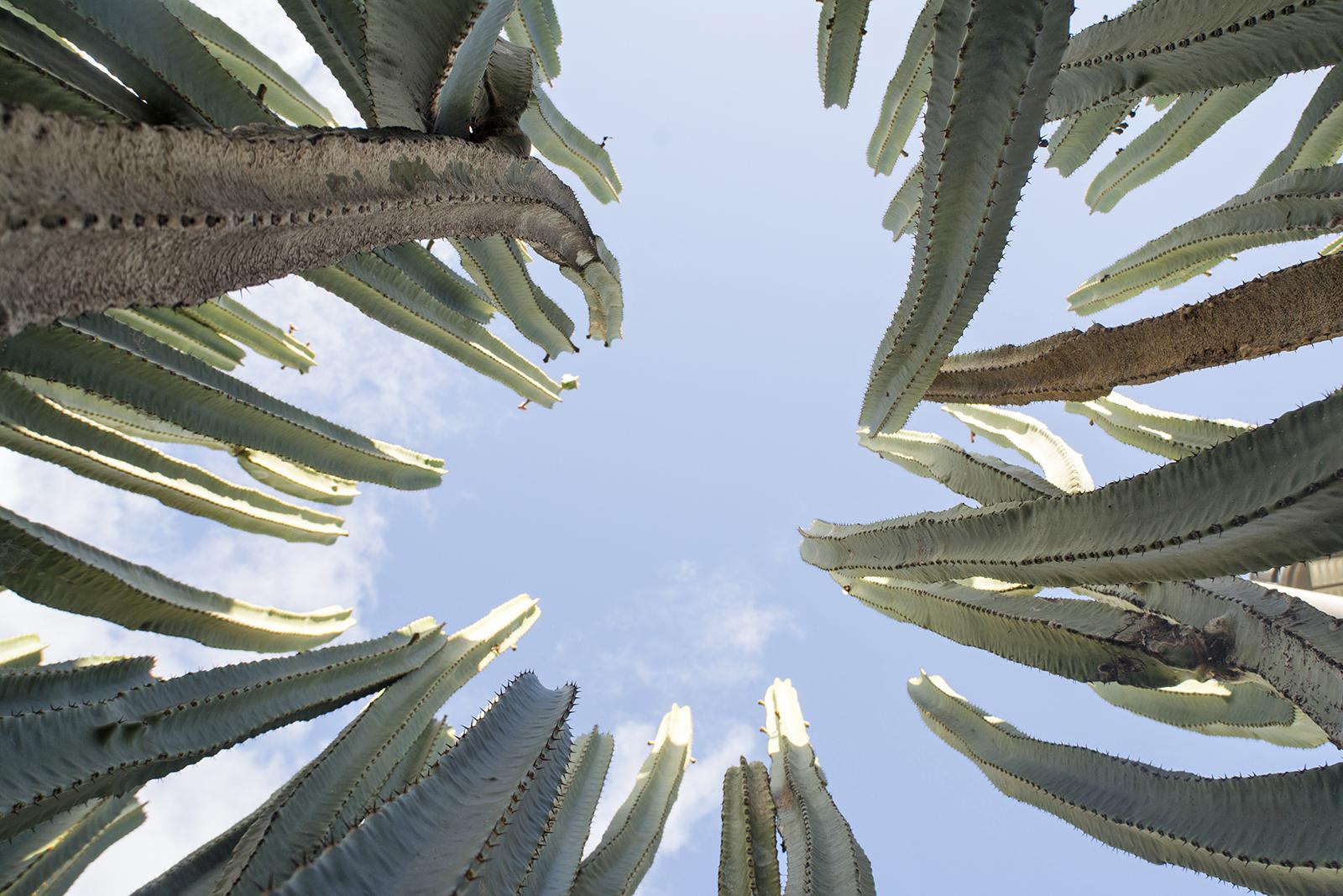 Binnenin een cactusboom