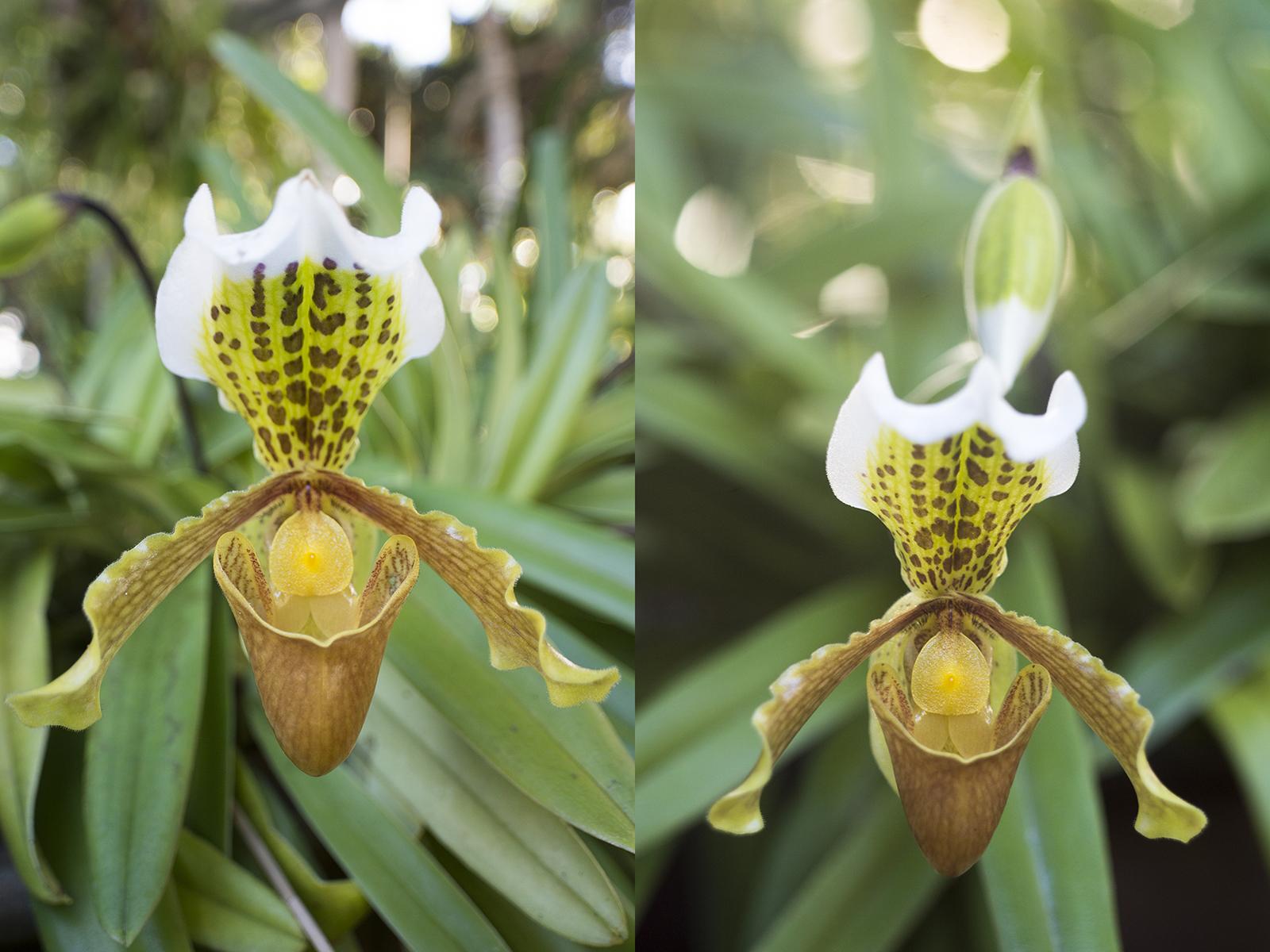 Orchidee met wide-angle (links) en 58mm (rechts).