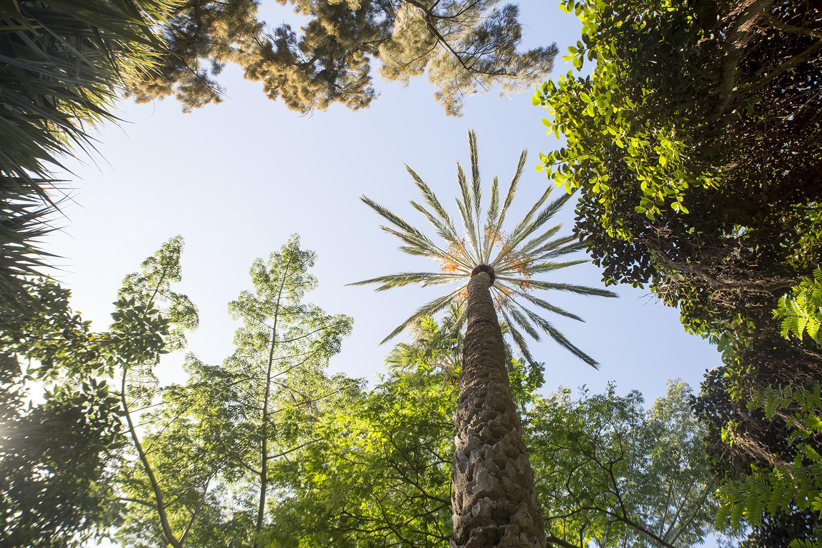 Botanische tuin Puerto de la Cruz
