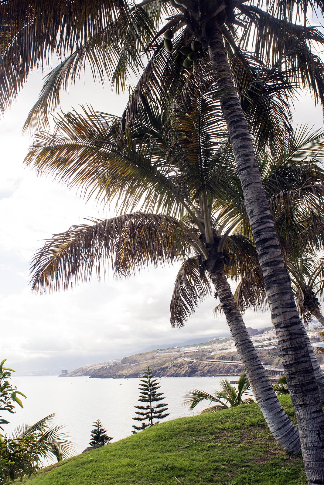 Palmetum Tenerife