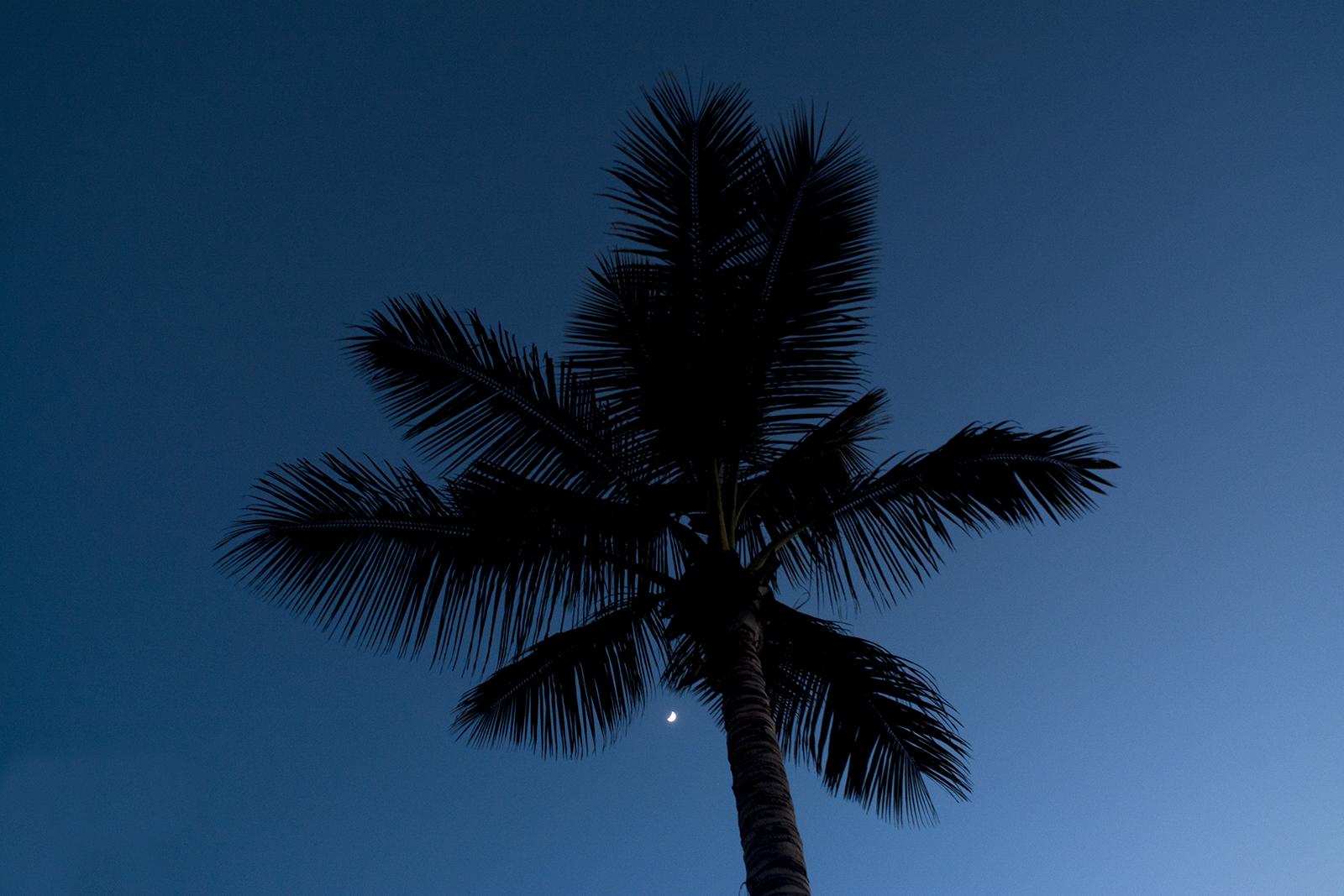 Palmen na zonsondergang