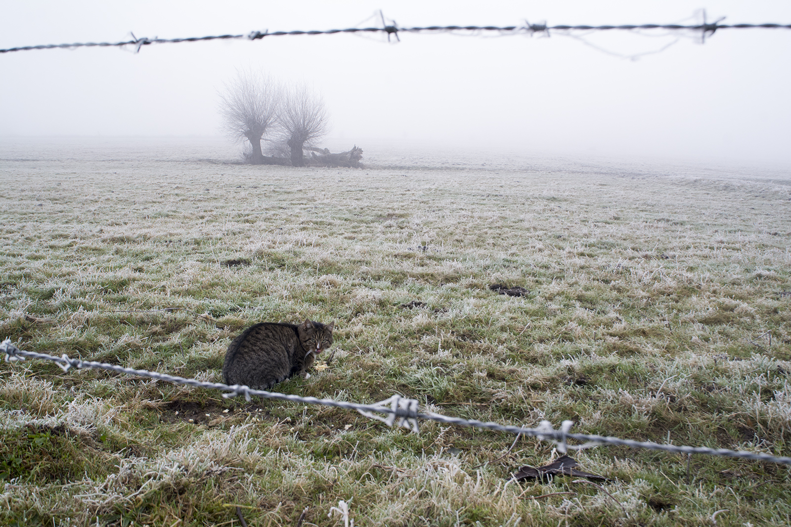 Een kat in winterlandschap
