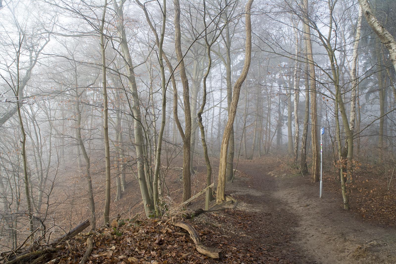 Winters woud