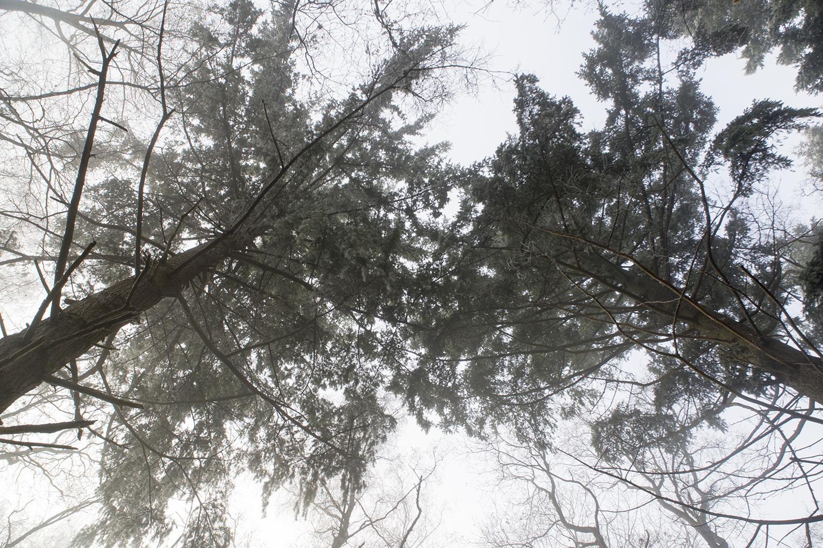 Mistige bomen