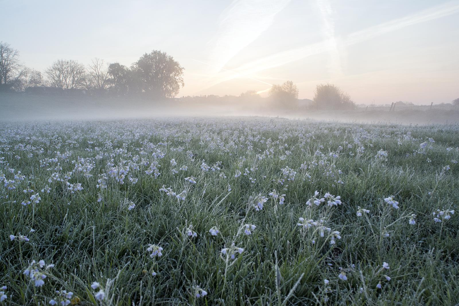 Bevroren ochtend