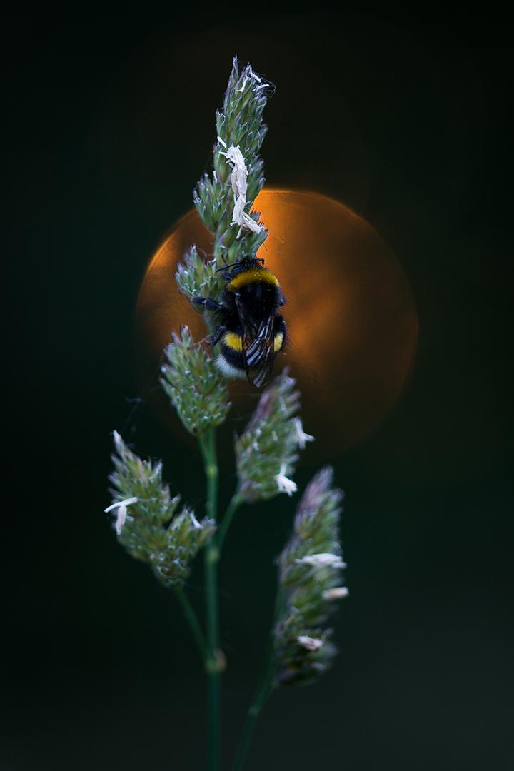 Beestjes in de zomer