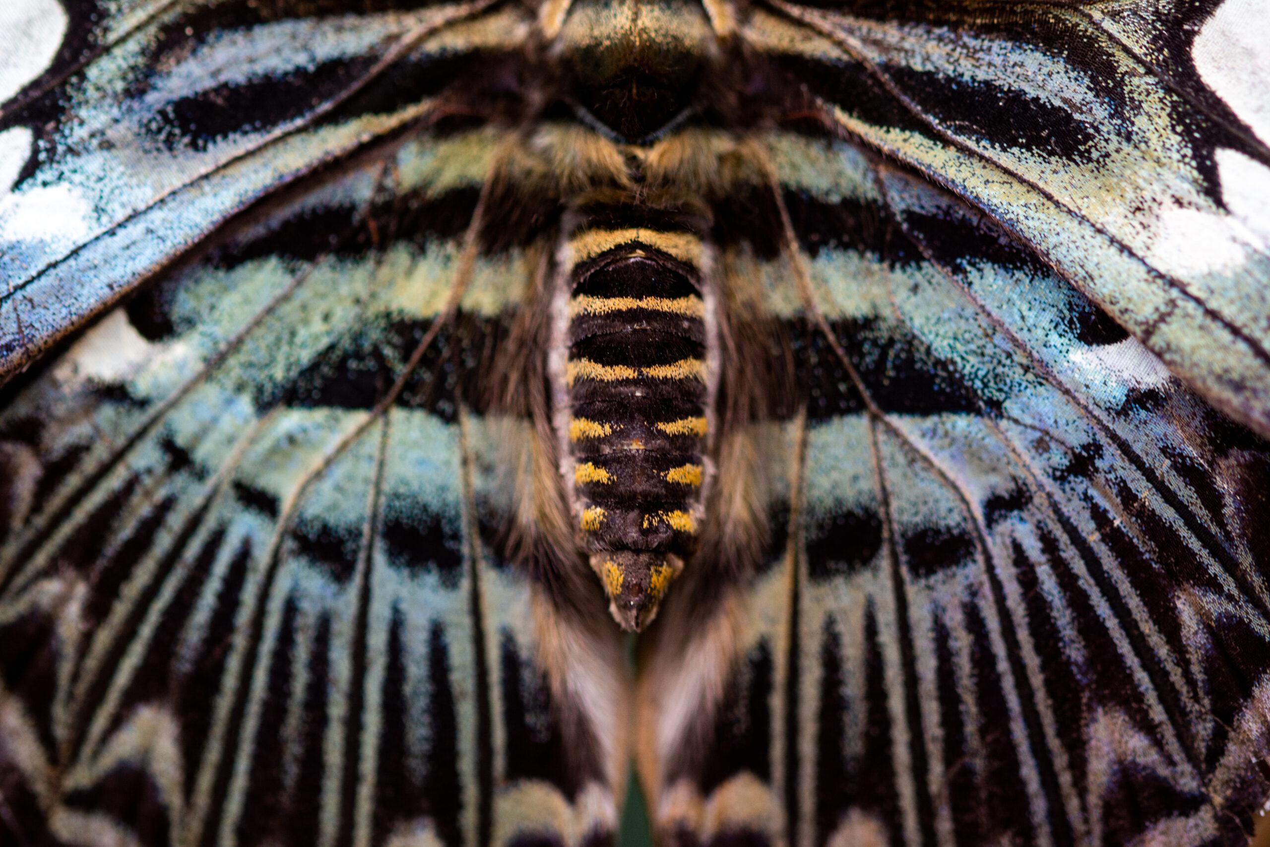 Butterflies and moths – Lepidoptera